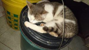 Cat bucket