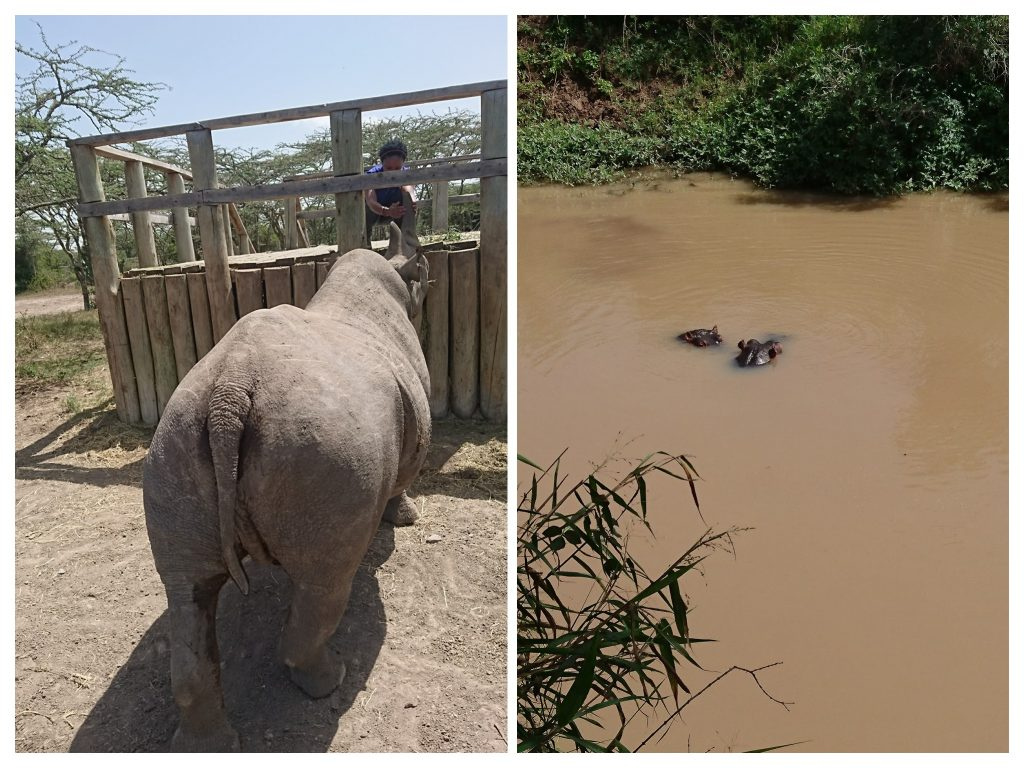 Baraka Black Rhino | Hippo Hide